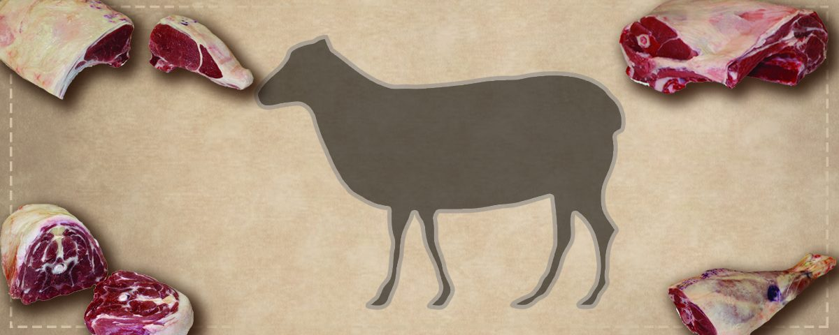 lamb meat and silhouette of lamb
